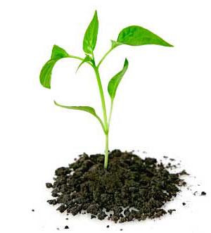 Seedling_5